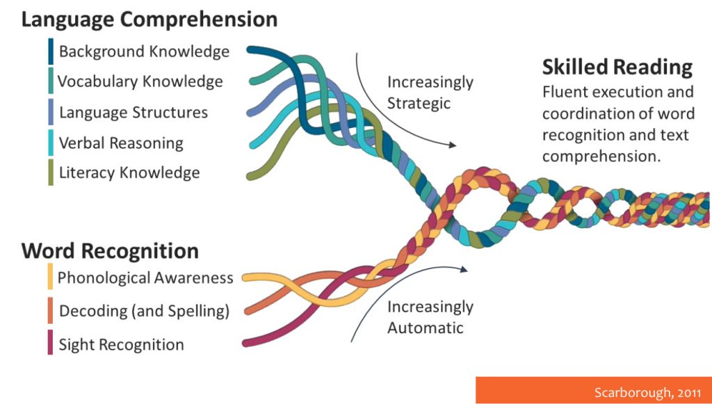 Language comprehension( background knowledge; vocabulary knowledge; language structures verbal reasoning; literacy knowledge) are increasingly strategic. Word Recognition (phonological awareness; decoding and spelling; sight recognition) are increasingly automatic. Skilled reading is then the fluent execution and coordination of word recognition and text comprehension.